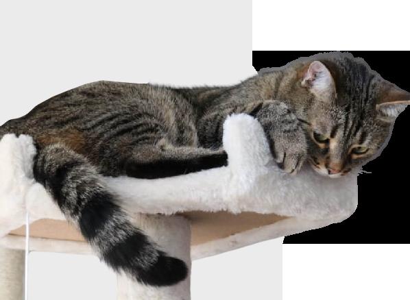 Opatrovanie mačiek